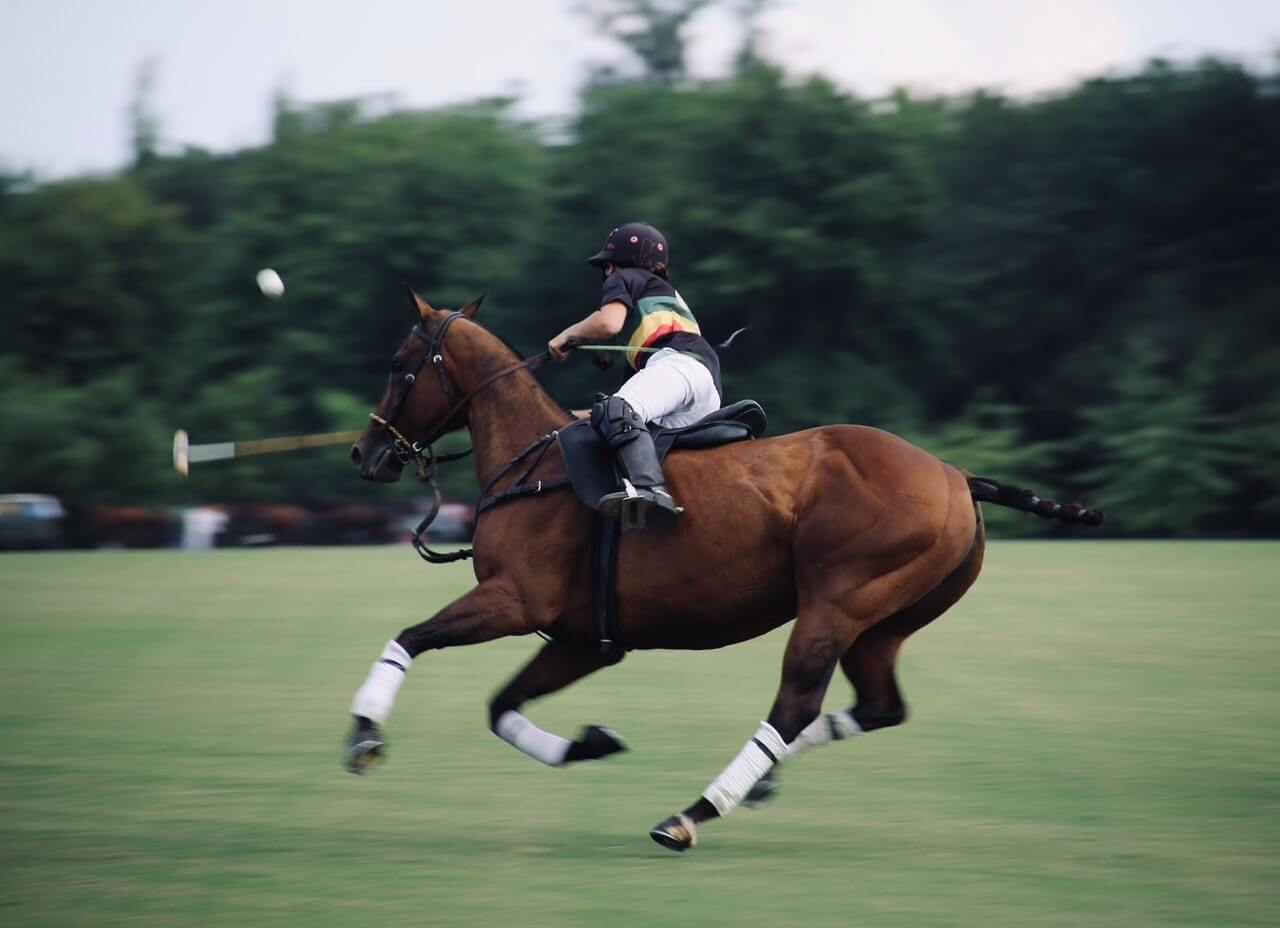 classic experience - polo windsor